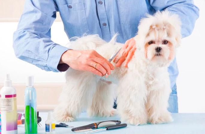 peluqueria-canina-ftb