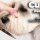 curso de peluquería canina febrero 2020 almendralejo
