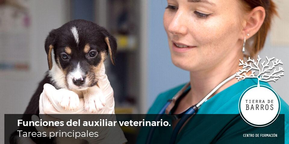 funciones de un auxiliar de veterinaria
